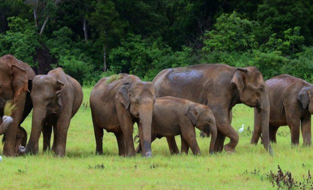 Death of elephants continuously? South African Shock!