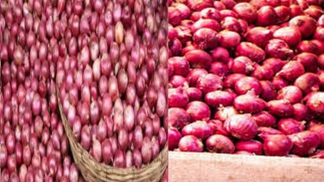 Federal government bans onion exports